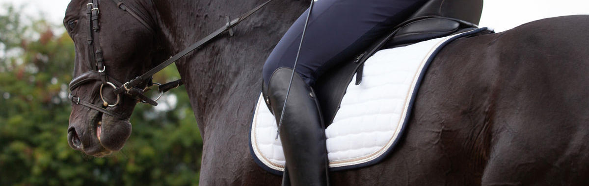 Cropped picture of a horse