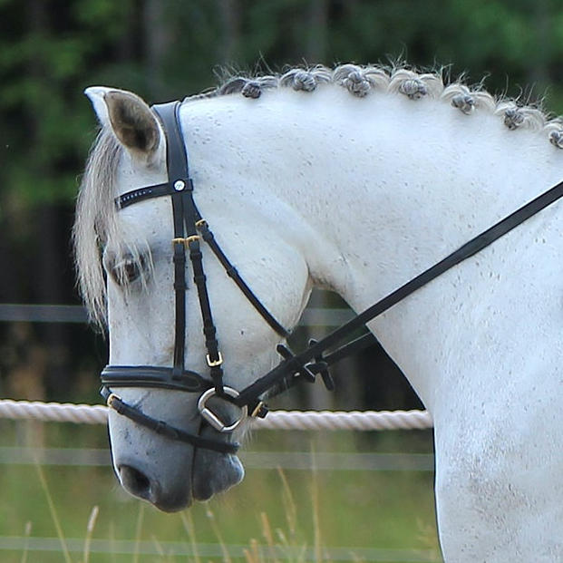 Image of a stable to link to stable grooming products