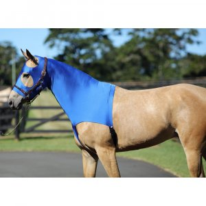 Horse wearing a lycra hood