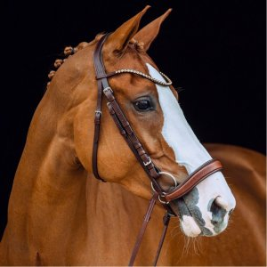 Product shot showing a brown bridle on a horse