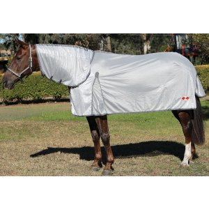 Horse wearing a rug